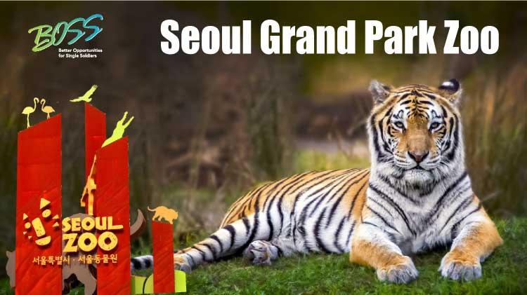 Seoul Grand Park Zoo Trip
